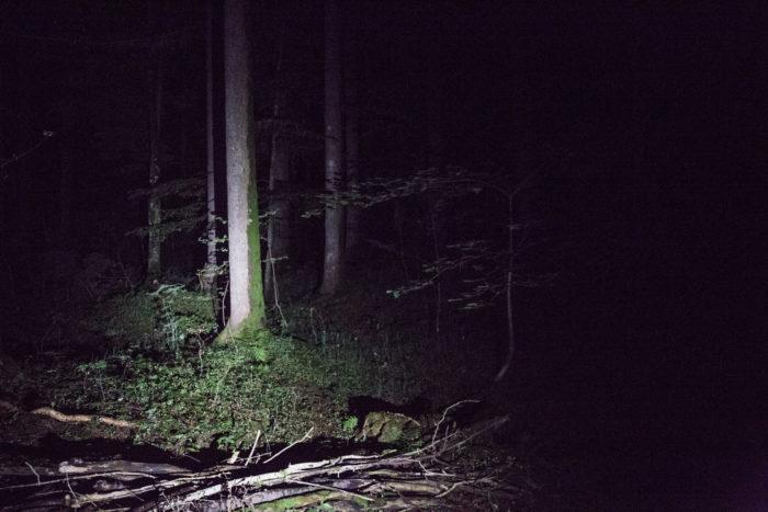 2017-06-04_PfiLa Wolfsstufe_523